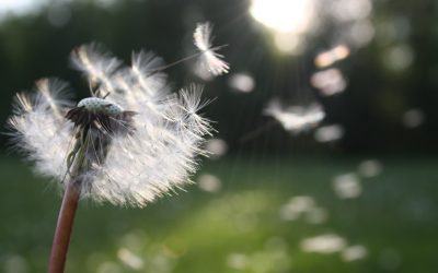 Treat Hay Fever Naturally with Acupuncture at the Alma Vale Centre