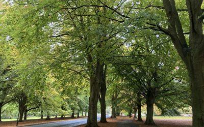 Autumn – The Season of the Metal Element